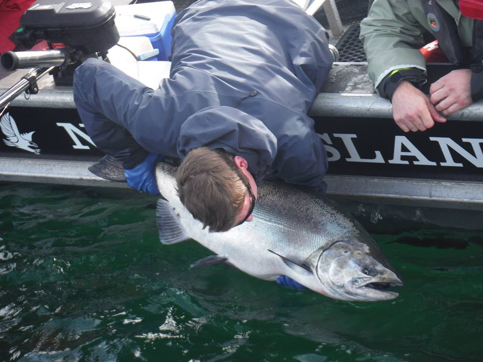 * 47.5lb release for Ed Fox and guide Brent Gallacher.